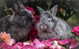 Preview wallpaper Two gray rabbits, petals