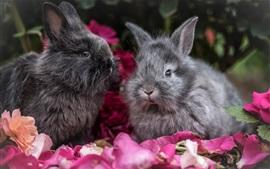 Dos conejos grises, pétalos