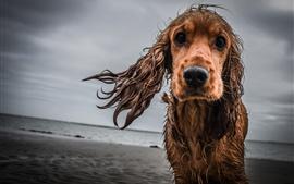 Perro mojado tristeza
