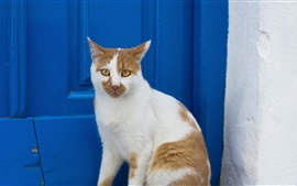 Preview wallpaper White cat, blue door