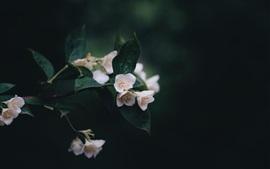 Flores brancas, galhos, fundo preto