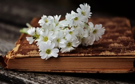 White little flowers and book