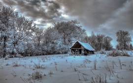 Winter, house, trees, snow, cold
