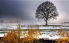 Preview wallpaper Winter, tree, grass, snow, morning, fog