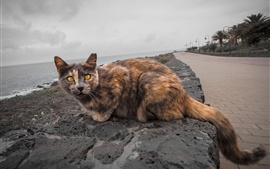 Preview wallpaper Yellow eyes cat, sea, path, park