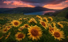 Flores amarillas, río, amanecer