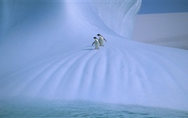 Antarctica, two penguins, ice