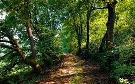 Arménia, natureza, estrada, árvores, arbustos
