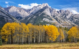 Aspen, Colorado, USA, mountains, trees, autumn