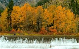 Осень, лес, деревья, водопады