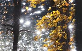 Осень, лес, желтые листья, блики