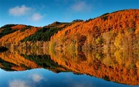 Outono, árvores, floresta, lago, reflexão da água