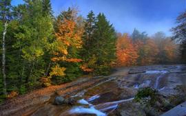 Otoño, árboles, bosque, corriente