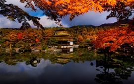 Outono, árvores, lago, casa, parque, Japão
