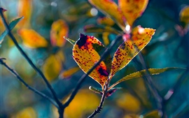 Preview wallpaper Autumn, twigs, leaves, blurry