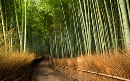 Preview wallpaper Bamboo, road