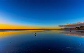 壁紙のプレビュー ビーチ、海、日没、犬