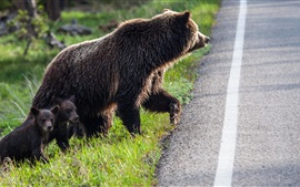 Preview wallpaper Bears, family, want cross the road