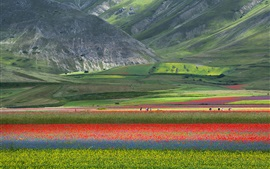 Preview wallpaper Beautiful nature landscape, field, flowers, mountains, Italy