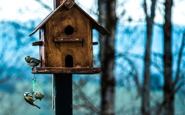 Preview wallpaper Birdhouse, birds, tit, forest, bokeh