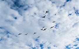 Pássaros voando, céu, nuvens