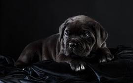 Preview wallpaper Black puppy rest