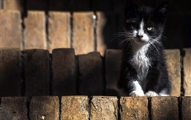 Black white kitten front view, ladders