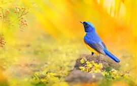 Синяя птица перьев, размытый фон