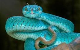 Blue snake, viper, eyes