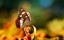 Preview wallpaper Butterfly, berries, bokeh