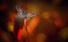 Borboleta, folha, luz de fundo