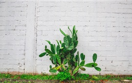 Preview wallpaper Cactus, green plants, wall
