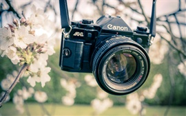 Preview wallpaper Canon camera, garden