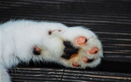 Preview wallpaper Cat paw