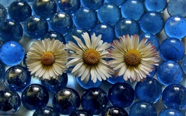 Preview wallpaper Chamomile and glass balls