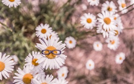 Preview wallpaper Chamomile flowers, white petals, glasses toy