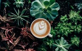 Café y plantas de interior, plantas suculentas