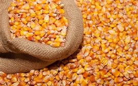 Preview wallpaper Corn kernels, grain, bag