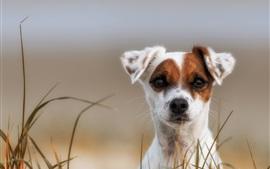 Симпатичный вид щенка, белый коричневый