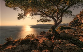 Dawn, sea, tree, stones, sunrise