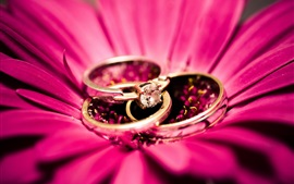 Anéis de diamante, flor rosa, pétalas