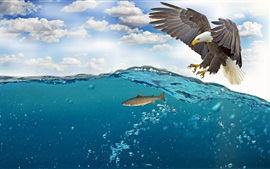 Preview wallpaper Eagle want to catch fish, water, bubbles