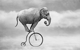 Preview wallpaper Elephant ride bike, sky, ball, creative design