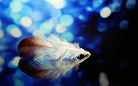 Preview wallpaper Feather, reflection, mirror, blue background, glare