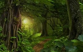 Bosque, selva, árboles, camino, verde