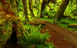 Preview wallpaper Forest, moss, trees, path, green