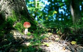 숲, 버섯, 이끼, bokeh