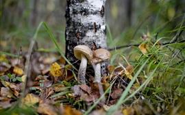 森林,蘑菇,叶子,秋天