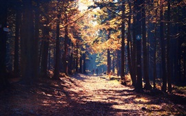 Preview wallpaper Forest, road, person, sunshine, autumn