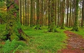 Floresta, árvores, grama, musgo, verde